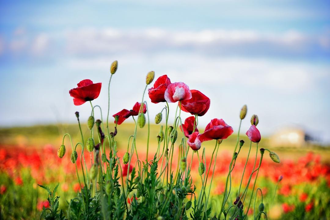 Red Carpet della Puglia   Primavera Murgiana