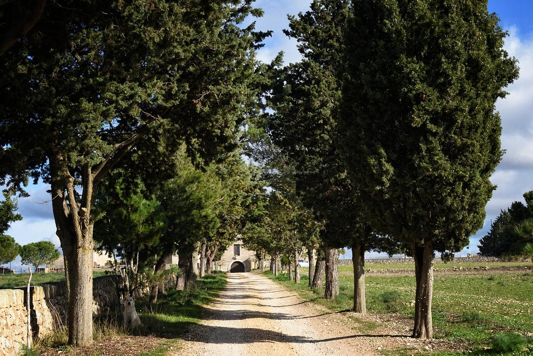 Masseria Moscatella   ex Conti Filo della Torre   Altamura