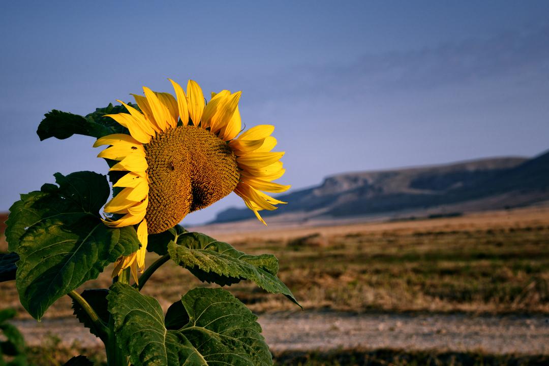 Parco Nazionale Alta Murgia (P.N.A.M.)