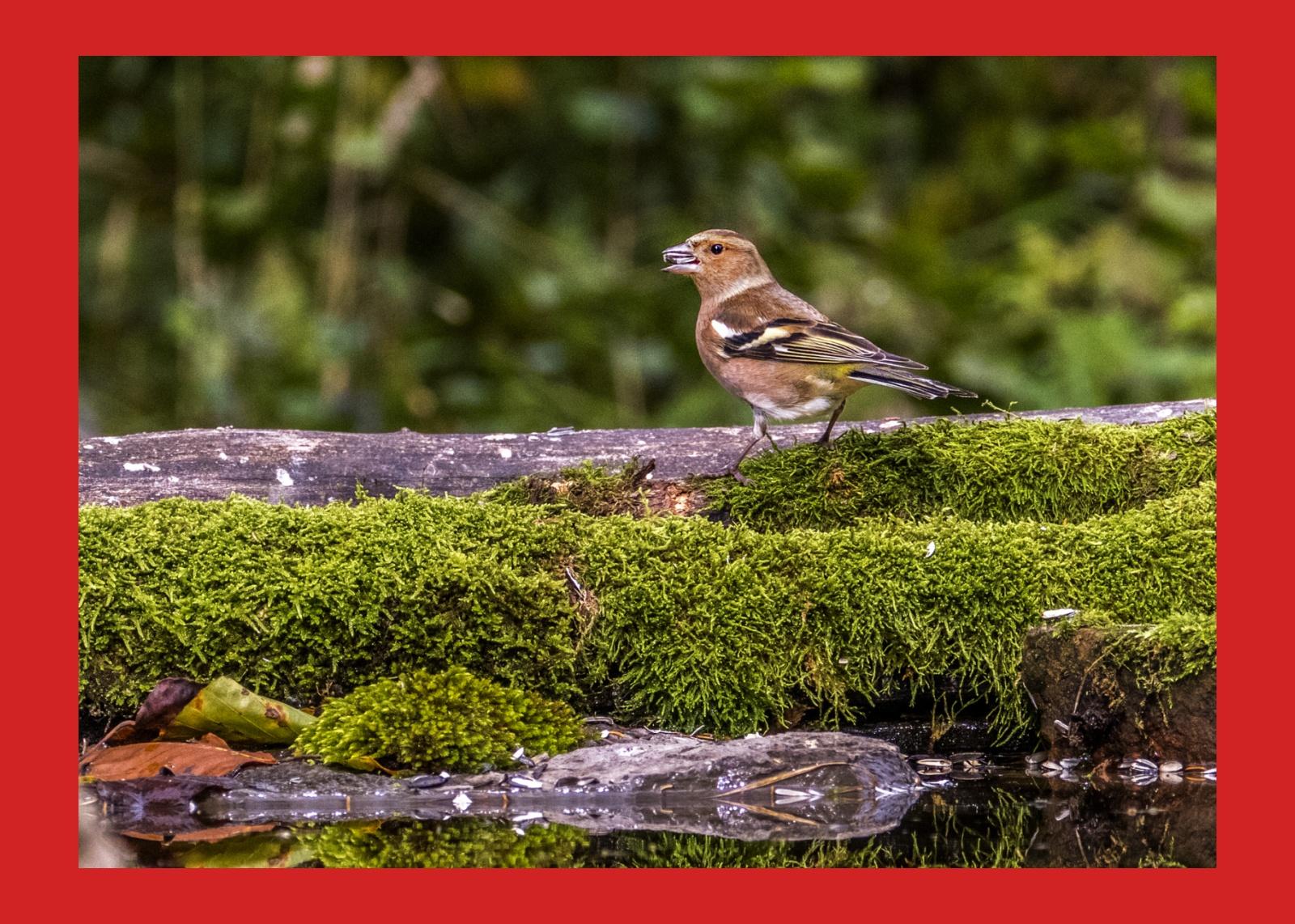 slovenia uccelli